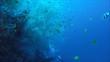 mit Weichkorallen bewachsene Steilwand, Pintuyan, Panaon Island, Southern Leyte, Philippinen