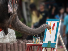 Artist Elephant Is Painting Pi...