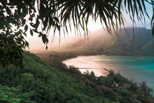Hiding In The Foliage Of The Hawaiian Rain Forest