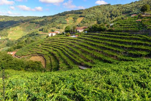 Vineyards of the Ribeira Sacra, Lugo, Spain