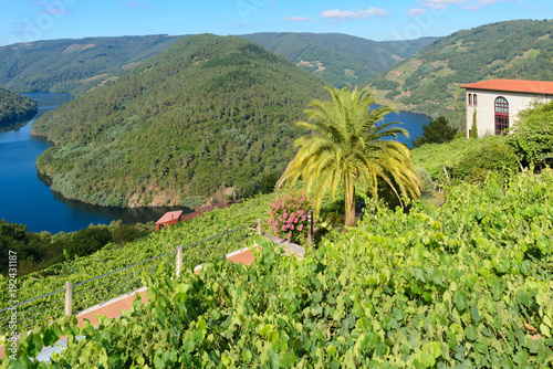 Valokuvatapetti Vineyards along Minho River, Lugo, Spain