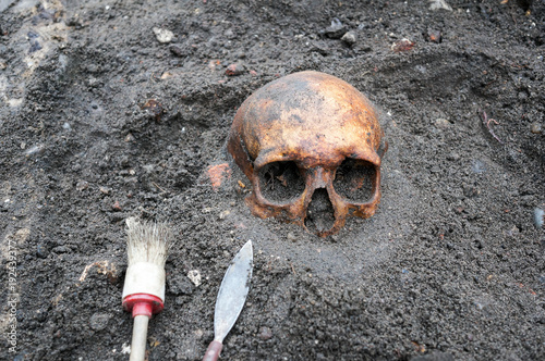 Fényképezés Archaeological excavation with skull still half buried in the ground