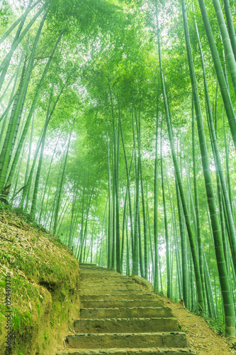 Poster Bamboe Bamboo and bamboo forest