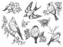 Birds Hand Drawn Illuatrations...