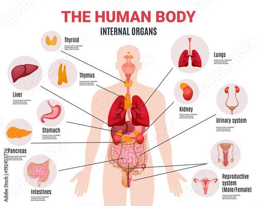 Fotografía  Human Internal Organs Infographic Poster