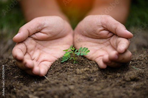 Spoed Foto op Canvas Planten Top view of young tree with soil in background. Earth Day concept.