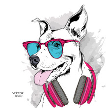The Poster Of The Dog Portrait In Hip-hop Hat And With Headphones. Vector Illustration.