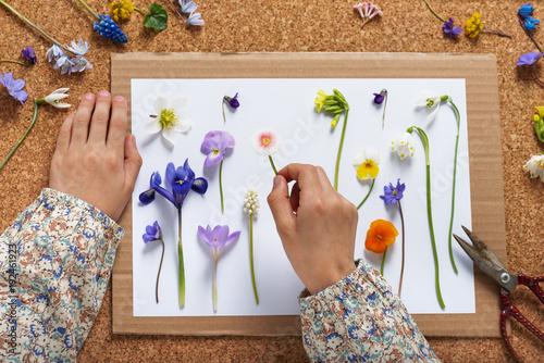 Child Makes A Herbarium Of Different Spring Flowers Children
