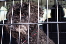 Pet Dog Sitting In Car Crate R...