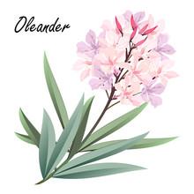 Oleander (Nerium Oleander). Ha...