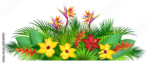 Foto  Tropical flowers with palm leaves (strelitzia, hibiscus, heliconia)