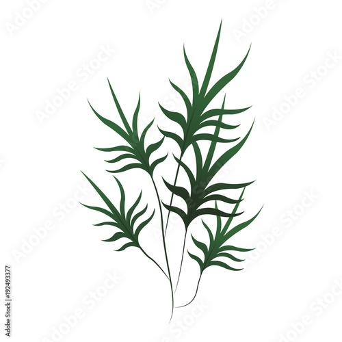 Fototapeta Plant leaves symbol icon vector illustration graphic design obraz na płótnie