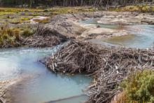 Beaver Dams In Laguna Esmerald...