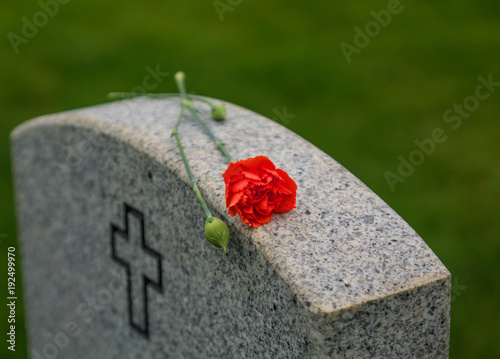 Photo Red Rose on a veterans tombstone