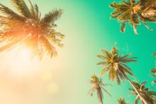 Vintage Coconut Palm Tree.