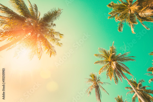 Tuinposter Palm boom Vintage Coconut Palm tree.
