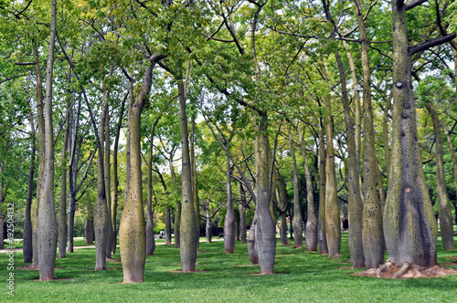 Fotografie, Obraz  unusual trees growing in a park in sunny Spain