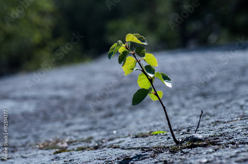 Fotografía  A lonely small tree rising from a fracture in a cliff