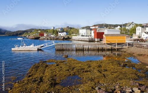Fotografie, Tablou  Newfoundland