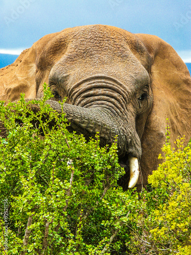 Recess Fitting Elephant African elephant encounter