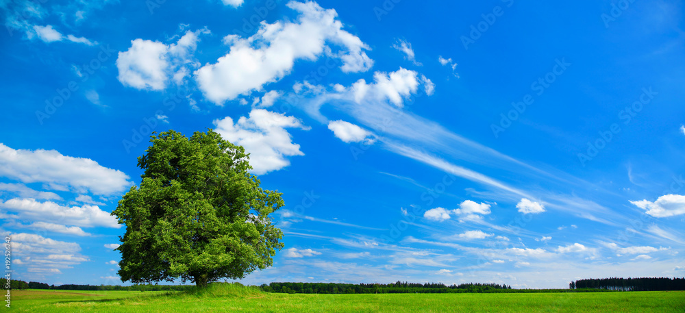 Linden Tree in Green Field,  Summer Landscape under Blue Sky with Clouds