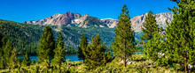 Panorama Of Eastern Sierra Nevada Mountains With Peaks Of June Lake Through Pine Trees