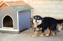 Cute Happy Black Dog Near His House On A Sunny Day. Dog Booth; House For An Animal