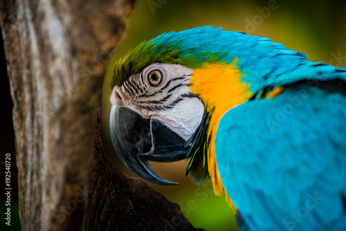 Tuinposter Papegaai Parrot, lovely bird, animal and pet in the garden
