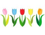 Fototapeta Tulips - チューリップ2
