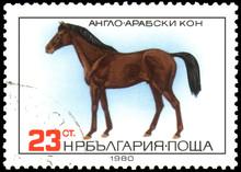 BULGARIA - CIRCA 1980: A Stamp, Printed In Bulgaria, Shows A Anglo-Arabian Horse
