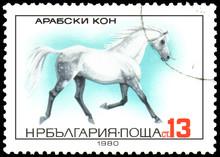 BULGARIA - CIRCA 1980: A Stamp, Printed In Bulgaria, Shows A Arabian Horse
