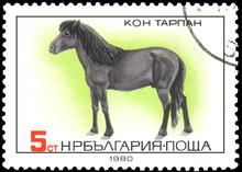 BULGARIA - CIRCA 1980: A Stamp, Printed In Bulgaria, Shows A Tarpan Horse