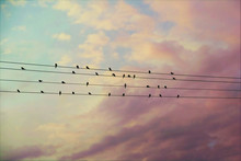 31 Swallows On The Wires