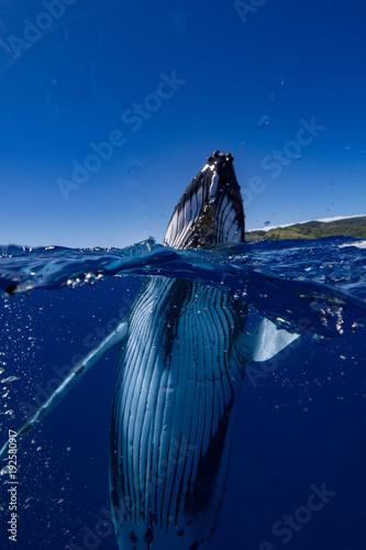 Photo baleine mi eau mi air