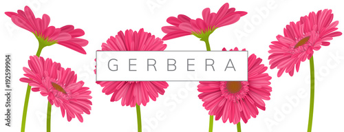 Fotografie, Obraz Horizontal banner decoration with pink gerbera daisy flowers and text frame