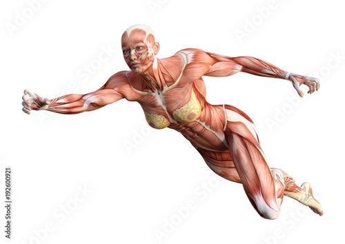 3D Rendering Female Anatomy Figure on White - Buy this stock ...