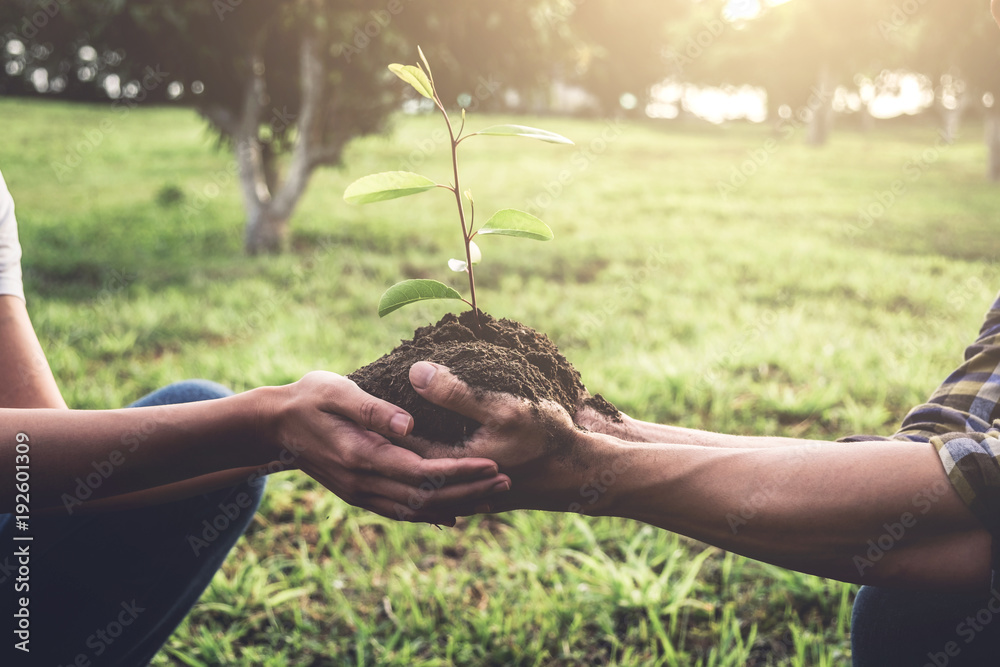 Fototapeta Young couple carrying a seedlings to be planted into the soil in the garden as save world concept, nature, environment and ecology