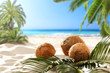 coconuts on the beach with a place for milk or cream