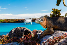 Land Iguana With A White Boat ...
