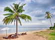 Thailand. Picturesque sandy beach with palm trees, sun beds and umbrella