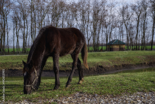 Photo  horse grazing at the ranch in the spring