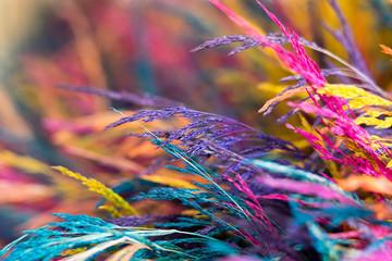 FototapetaColored branches, vibrant color mixture