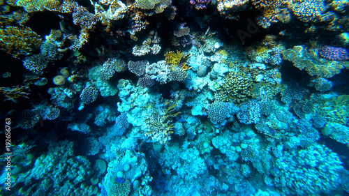 Spoed Foto op Canvas Koraalriffen corals on the seabed