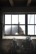 Horse Standing Near Barn Window