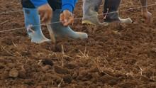 Close Up Shot Farmer Planting ...
