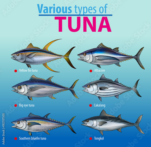 Vector illustration, various type of tuna fish Wallpaper Mural