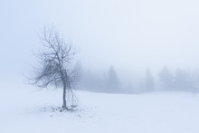 Lone Tree In Snow With Broken ...