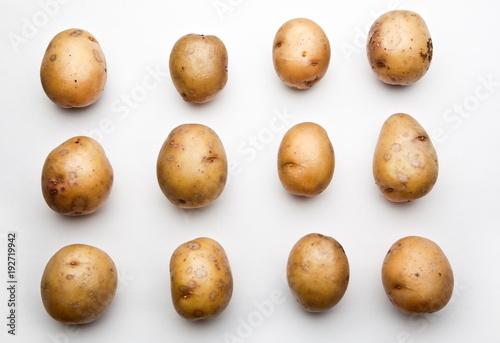 Potato Background studio