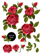 Set Of Red Roses And Elements ...