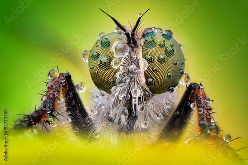 Türaufkleber Makrofotografie Extreme sharp and detailed macro of robber fly